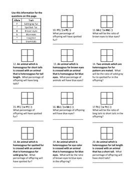 genotypes and punnett square worksheets pinterest worksheets school life and life science. Black Bedroom Furniture Sets. Home Design Ideas