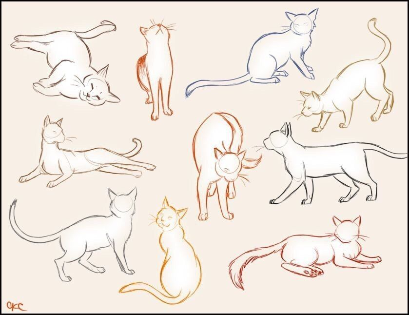картинки туториалы коты принципе, колли является