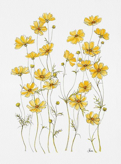 I Love Yellow Cosmos Flowers They Will Take Over Your Garden In The Most Gorgeous Way They Self Seed So Before You Know Cosmos Flowers Yellow Art Flower Art