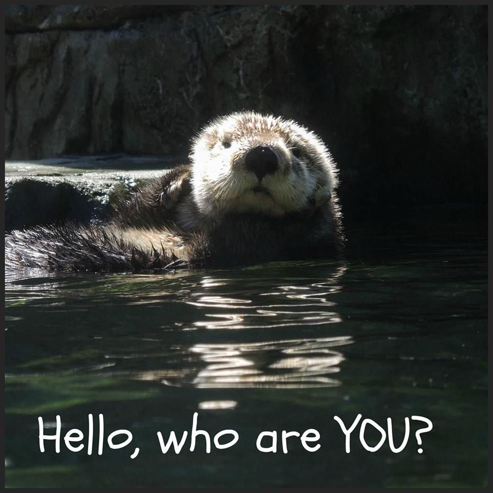 I WANT TO GET TO KNOW YOU? This little otter really wants to know who is visiting his home area.