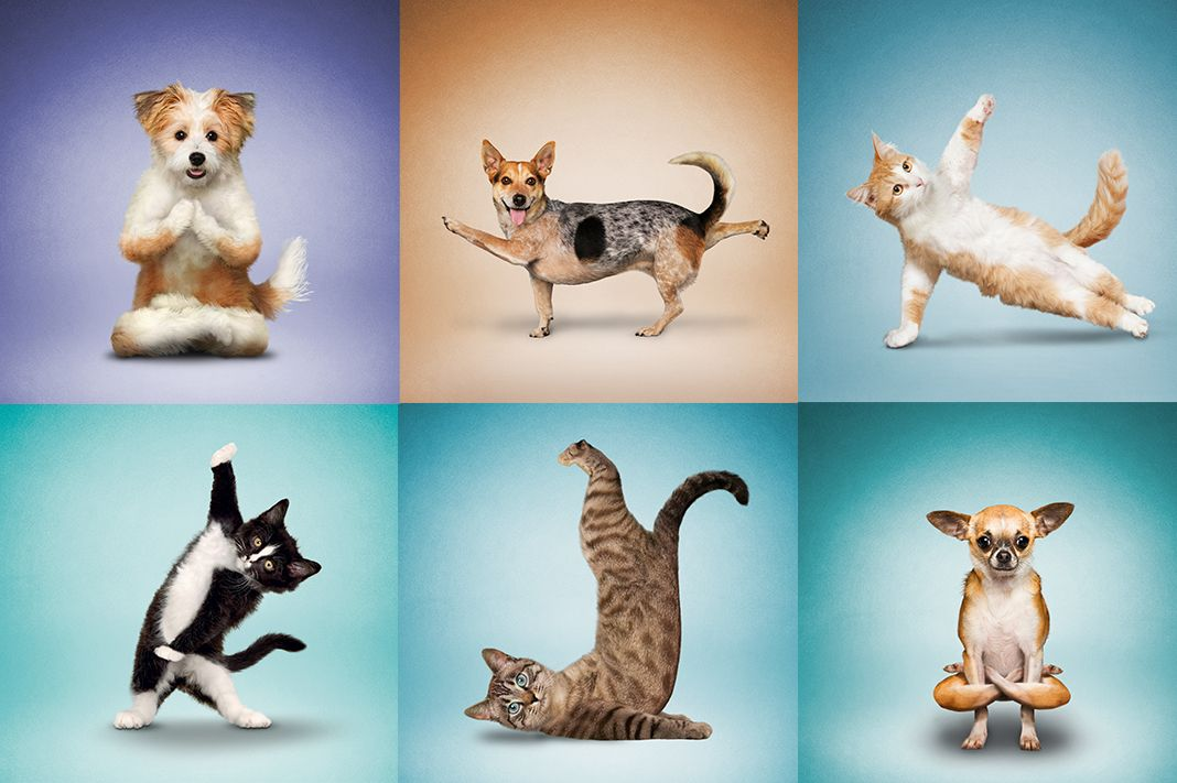 Pictures Of Dogs Doing Yoga
