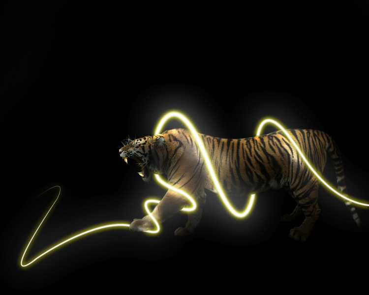 Cool Tiger Wallpaper Fb Lsu Tigers Cheers Drawings