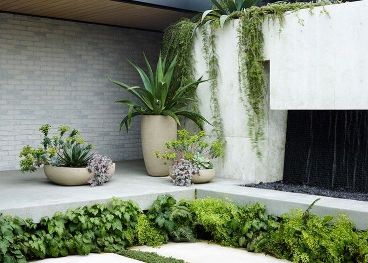 Container plants include exuberant sprays of euphorbia mixed with more typical succulents
