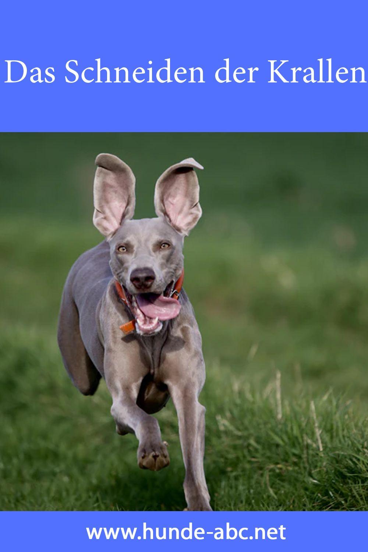 Pin Auf Hunde Artikel