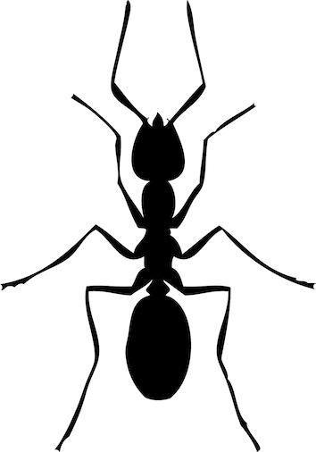Stoffparade: Ameise | alkuopetus ympäristötieto / science ...