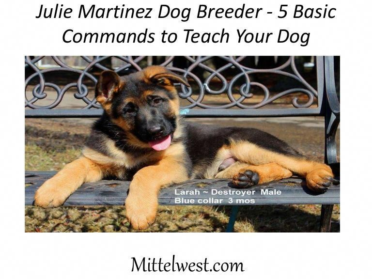 5 Basic Commands To Teach Your Dog Commandstoteachyourdog