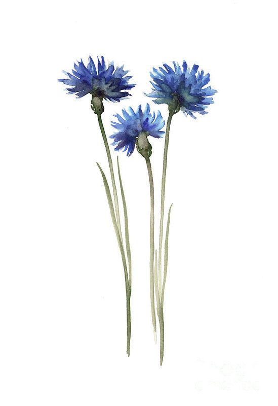 Cornflowers Art Print Blue Green Wall Decor, Abstract Decor Modern House Illustration Art Print by Joanna Szmerdt