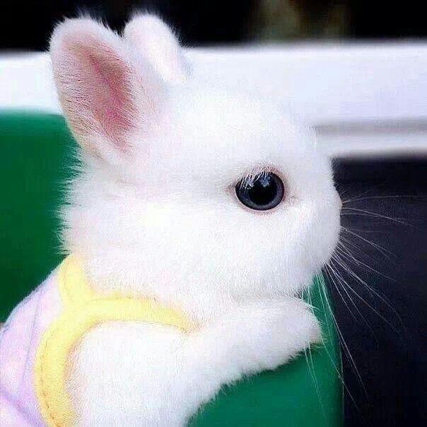Cute little rabbit, so fuzzy to!!!