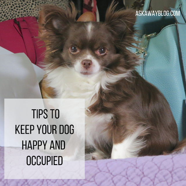 Tips To Keep Your Dog Happy And Occupied Your Dog Dogs Elderly Dogs