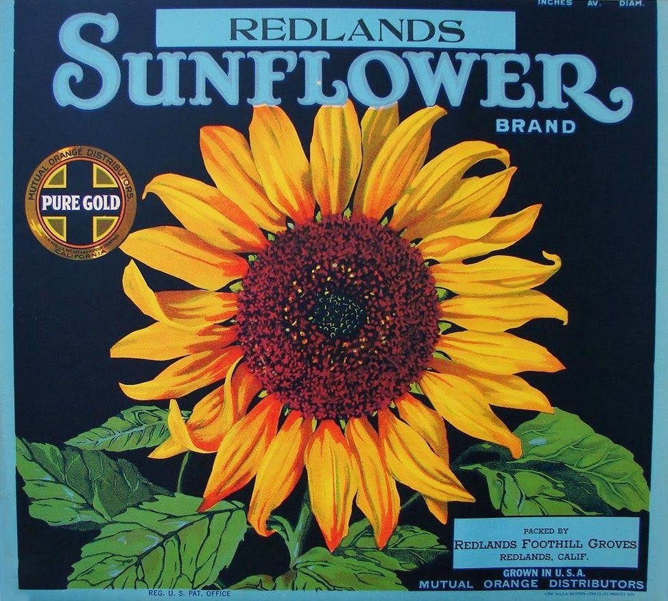 Los Angeles Sunflower Flowers Brand Orange Citrus Fruit Crate Label Art Print