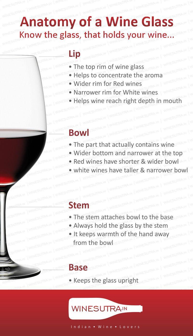 Anatomy Of A Wine Glass Winesutra Infographics