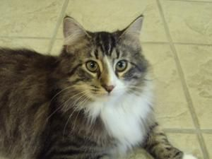 Adopt Shiloh On Petfinder Furry Friend Shiloh Cats
