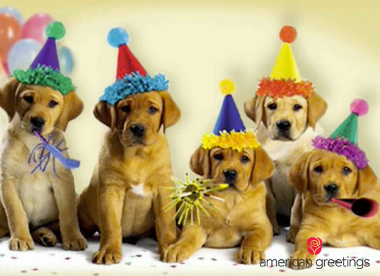 Amazon Com Amazon Egift Card Happy Birthday Dogs Animated