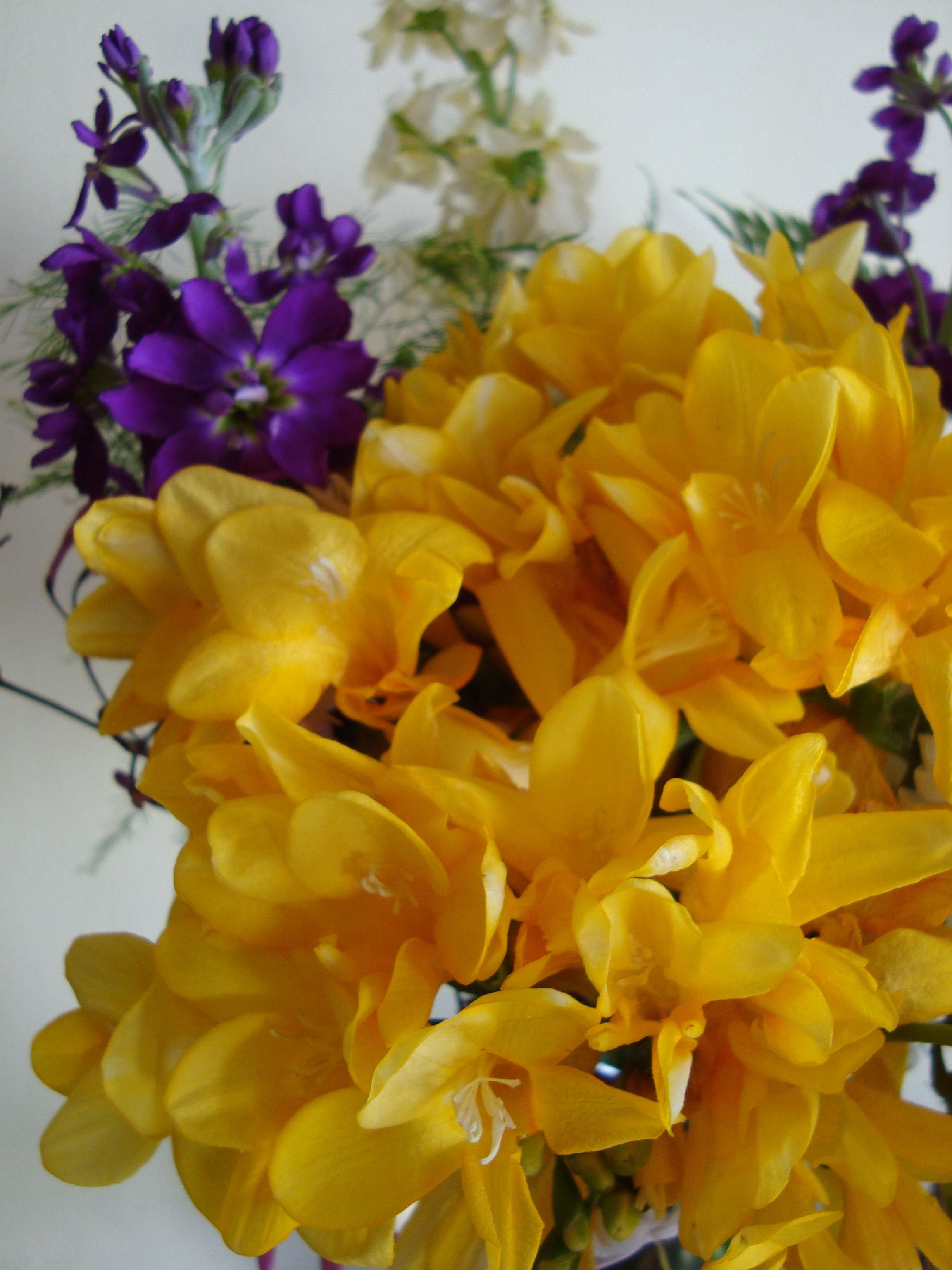 Yellow Freesia A Flower Freesia Gentiana Lisanthus