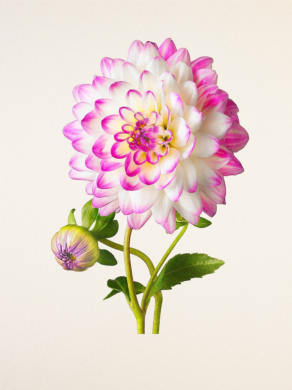 The Most Beautiful Flowers Interesting Things From Kottke