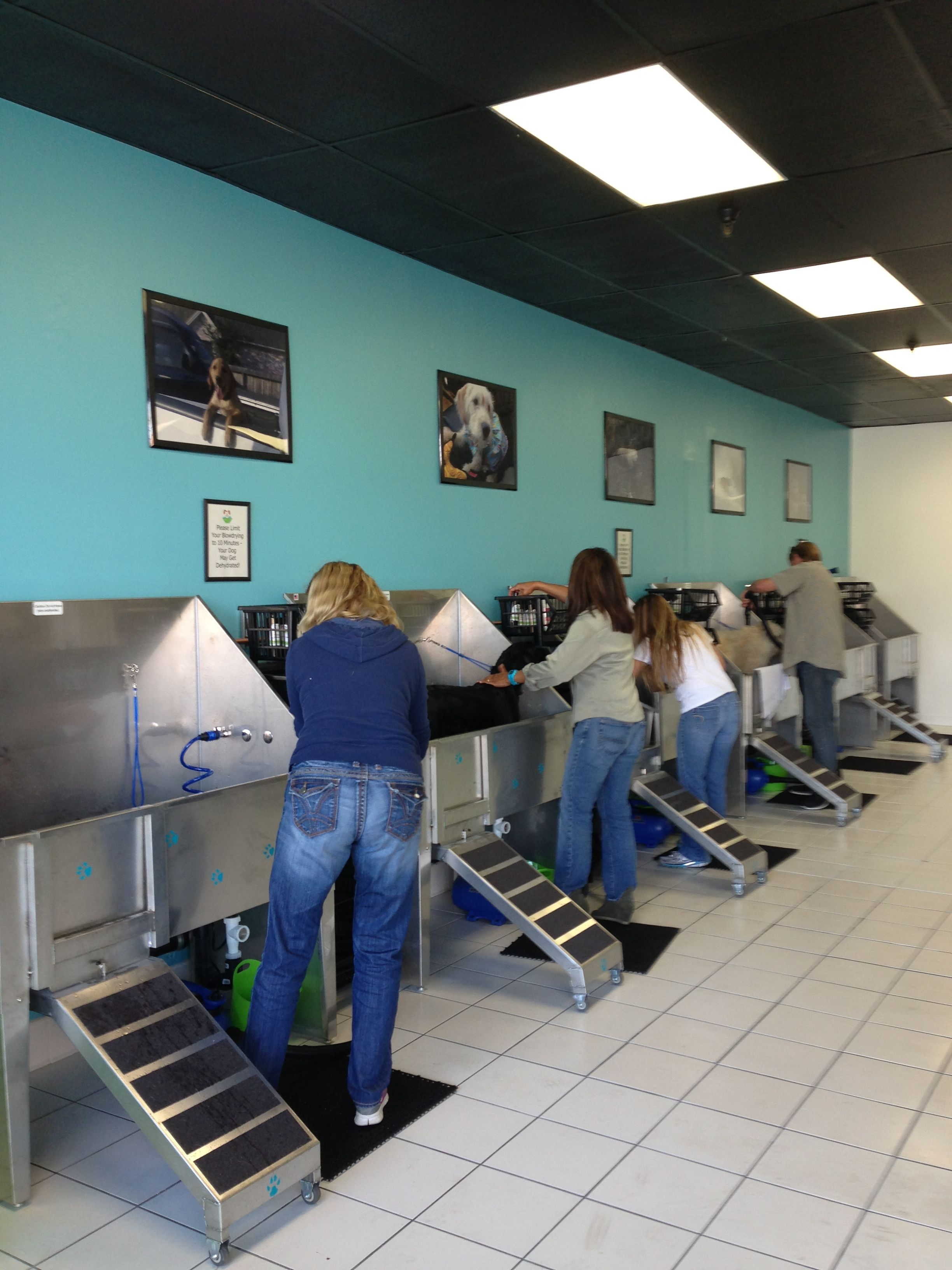 Repinned self service dog wash tub stalls at the dashing pooch repinned self service dog wash tub stalls at the dashing pooch cat lovers t shirt pinterest service dogs tubs and dog solutioingenieria Image collections