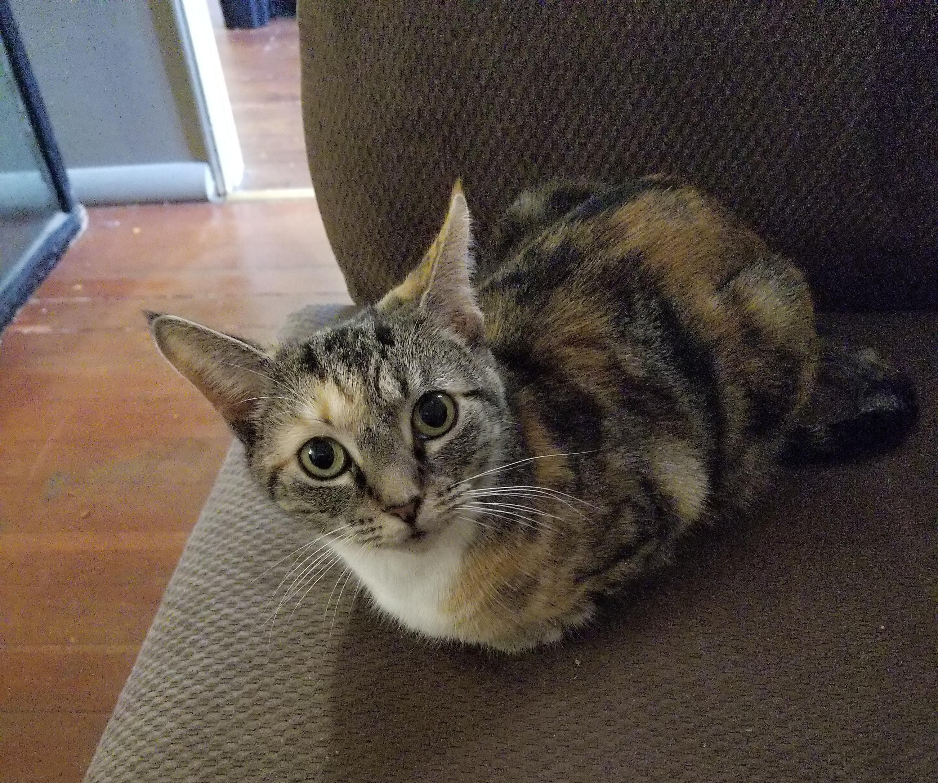 This Is Chloe Kitten She Makes The Cutest Cat Loaf Ever Cats Kittens Cute Cat