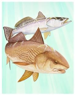 Guy harvey painting art redfish and trout duet gone for Harvey s paint and body