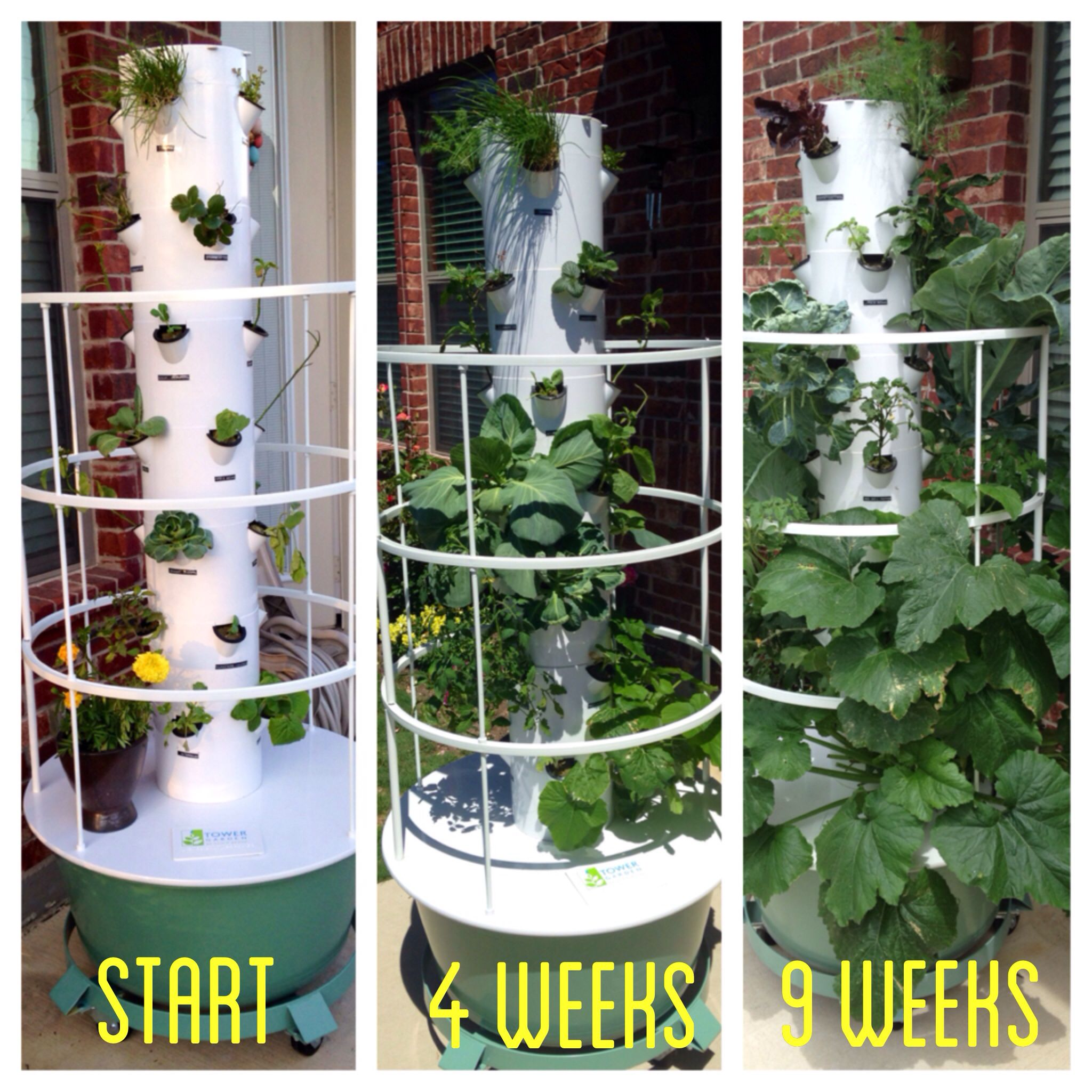 My Juice Plus Tower Garden Progress From Start To Nine Weeks Juiceplustowergarden Towergarden Growyourown Juice Plus Tower Garden Tower Garden Juice Plus