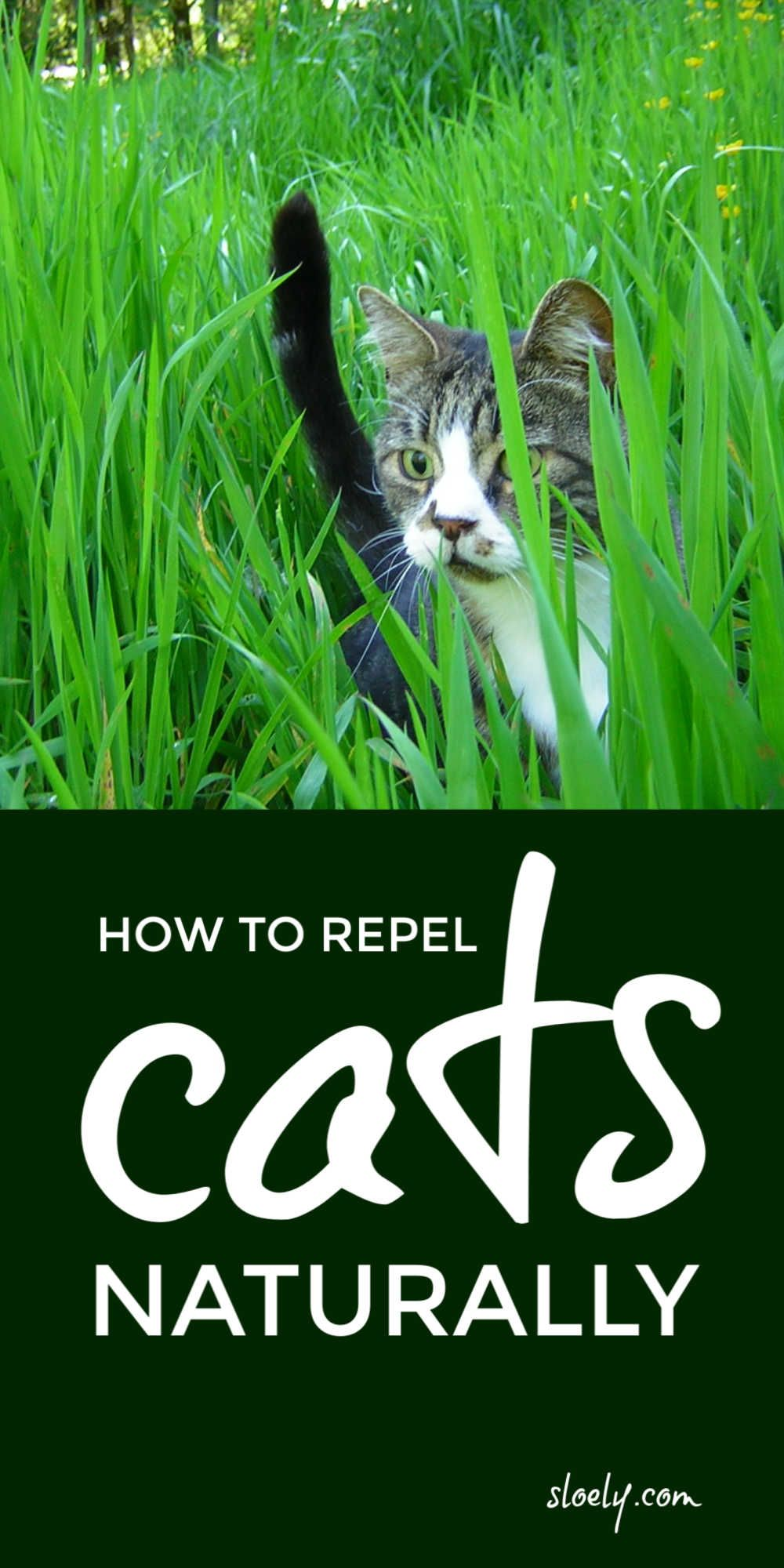 Learn how to repel cats from gardens and yards naturally