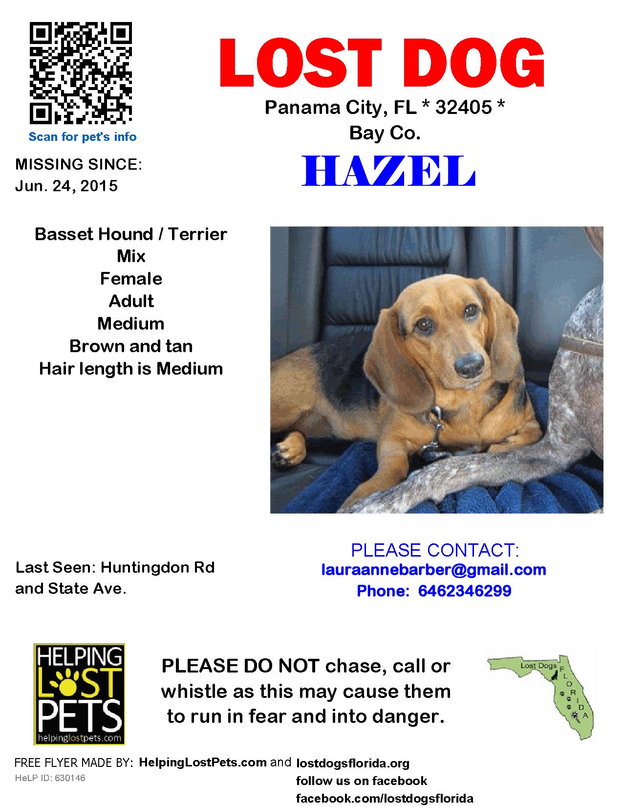 Lost Dog Female Panama City, FL, USA 32405 Losing a