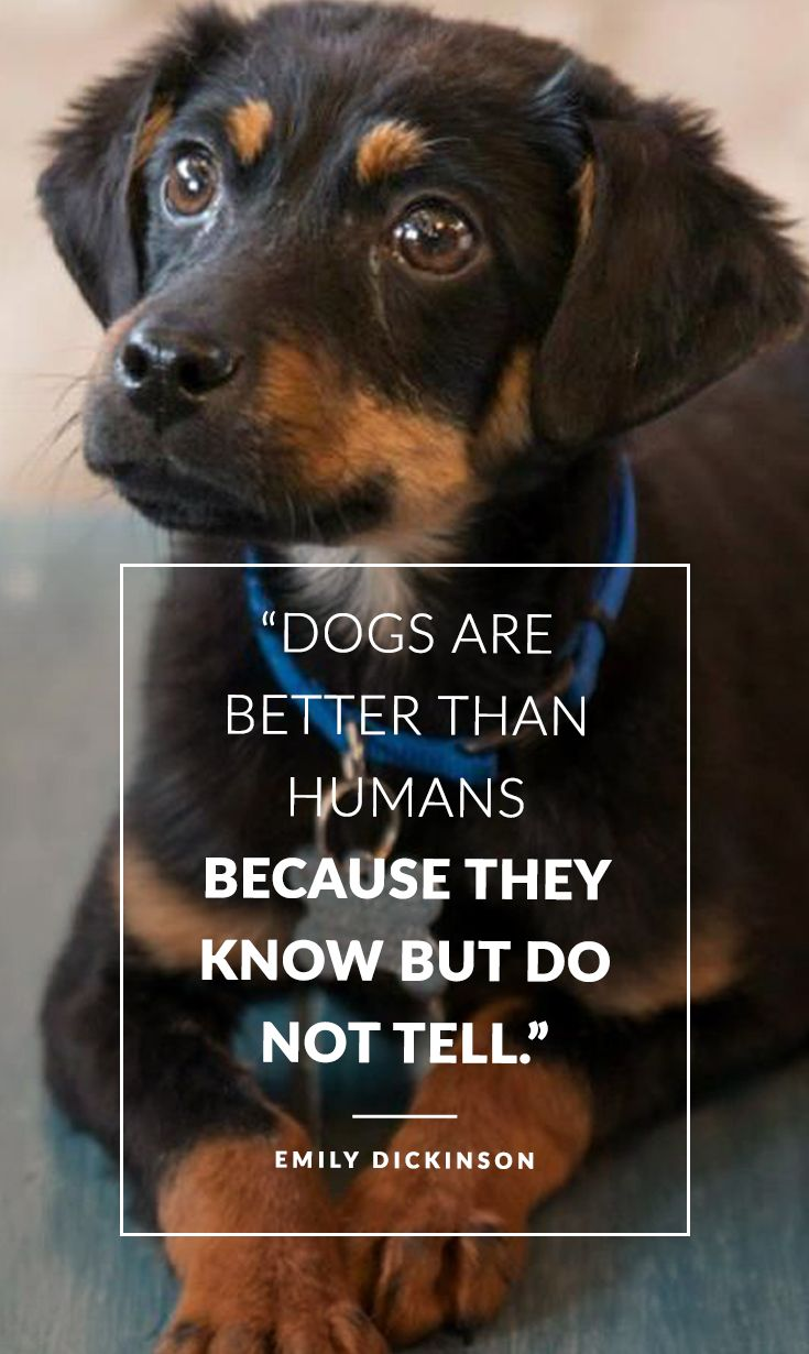 Dogs Are Better Than Human Beings Because They Know But Do Not Tell Emily Dickinson Dog Quotes Funny Dog Quotes Funny Dogs
