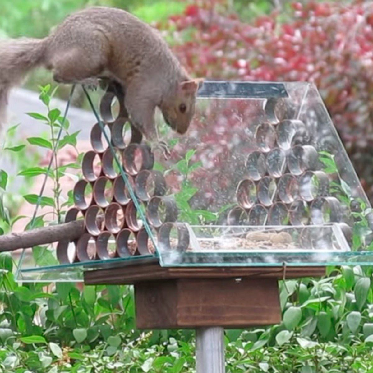 10 favorite attempts at preventing squirrels from reaching