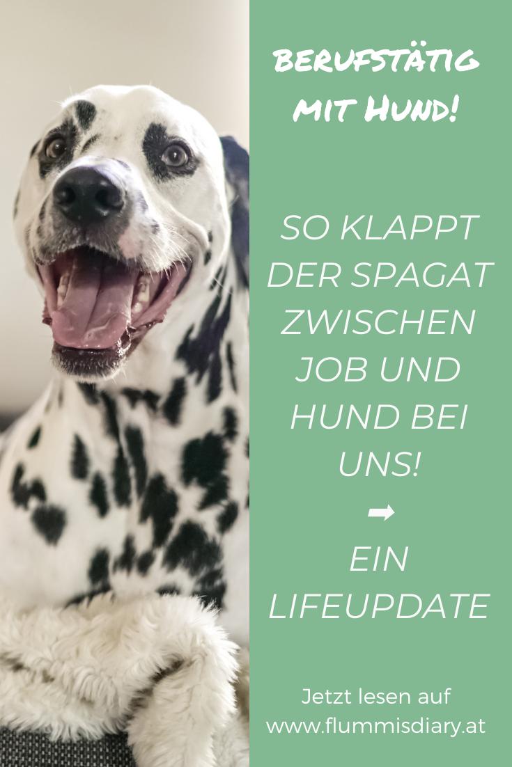 Berufstatig Hund Wie Das Funktioniert Und Alle Tipps Jetzt Am