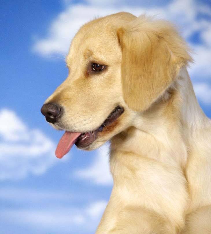 Labrador Retriever Names Black Yellow Chocolate Labs Dog Names Labrador Retriever Dogs Hugging