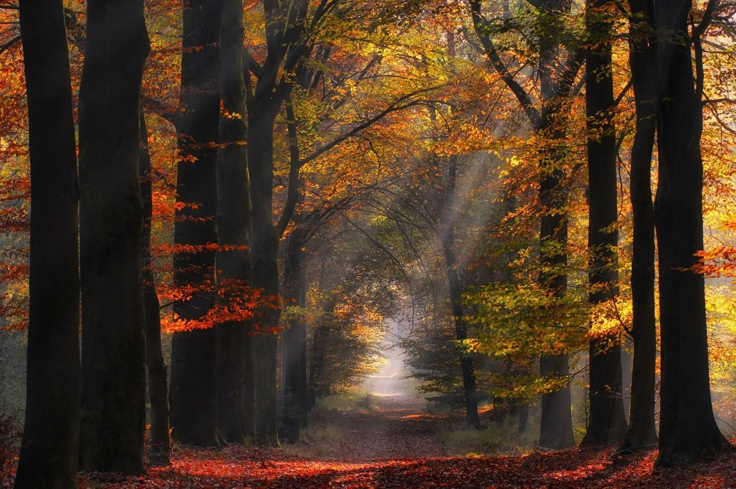Related Image Colorful Landscape Mists Nature Wallpaper rays of light trees autumn