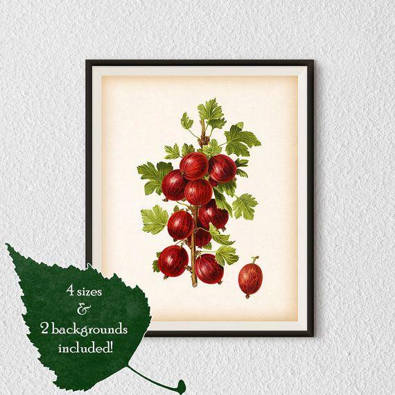 Kitchen art Kitchen illustration  Berry by RestoredBotanicalArt