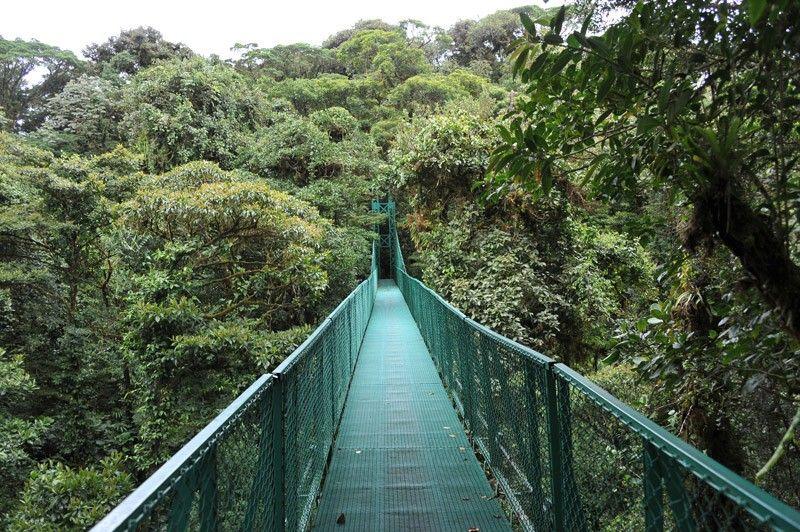Monteverde Cloud Forest Hanging Bridge
