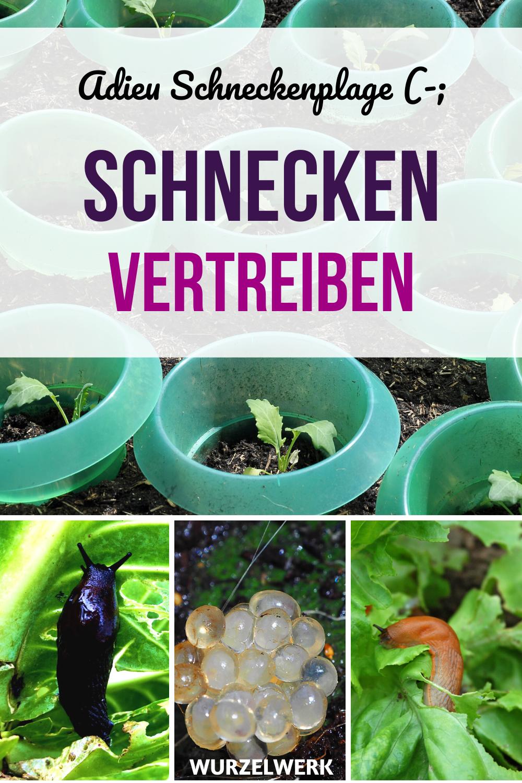 Das Hilft Wirklich Gegen Schnecken Und Nacktschnecken Wurzelwerk In 2020 Schnecken Im Garten Nacktschnecken Pflanzen Gegen Schnecken