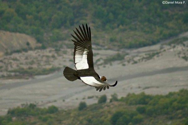 Top 25 Wild Bird Photographs Of The Week 27 Birds Falcons Hawks