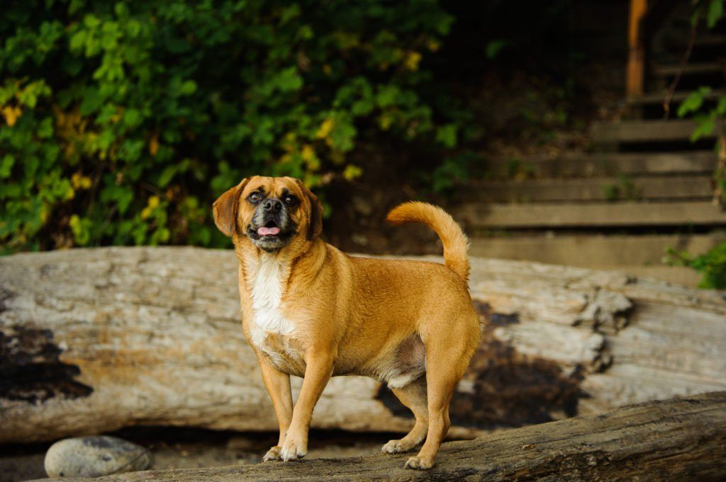 The Cutest Mixed Breed Dogs You Ll Want To Bring Home Dog Breeds