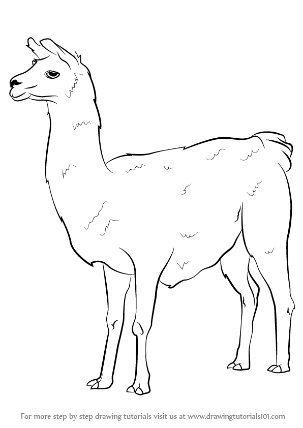 Learn How to Draw a Llama (Other Animals) Step by Step : Drawing ...