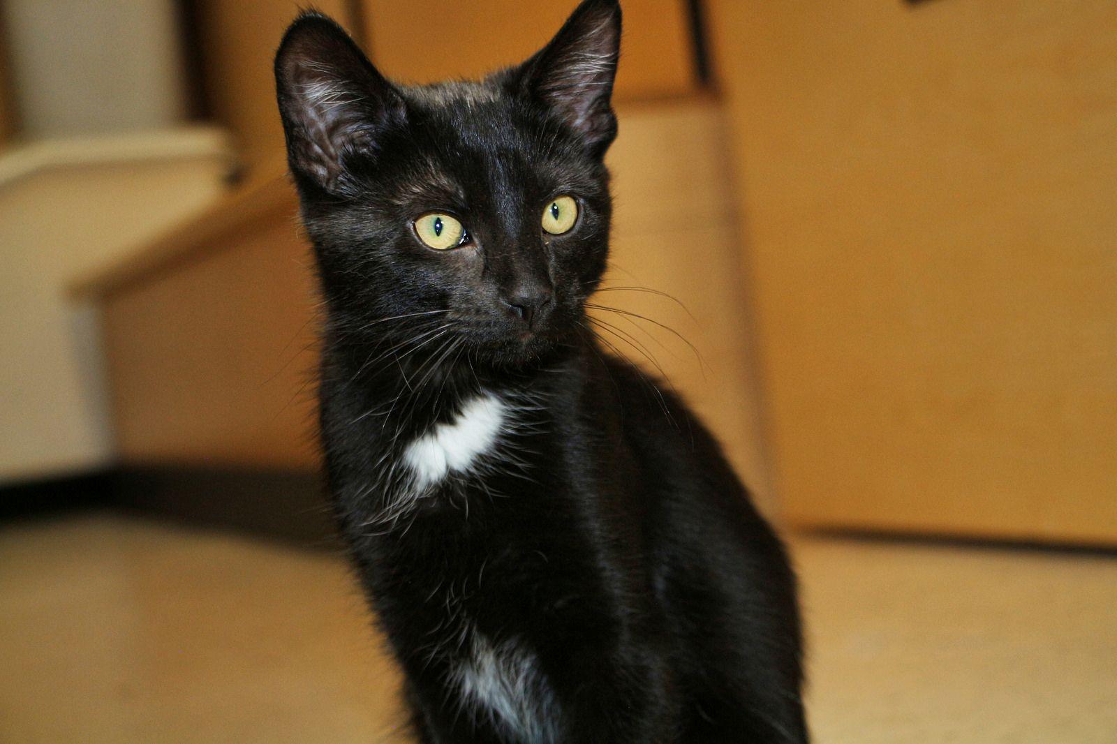 Pansy Scat Petsmart Adoption Centre June 6 2016 Cat Adoption Petsmart Cat Photo
