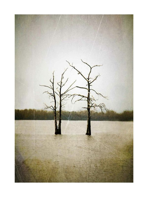 In 8x10 size print Two Cypress Trees in Swampy Water by Mary Ann ...