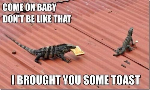 Come On Baby Dont Be Like That Best Funny Pictures Funny Animal Pictures Funny Animal Memes