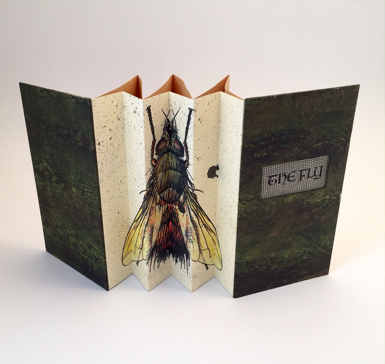 the fly by michele olsen 2 concertinas one for spine one for pages