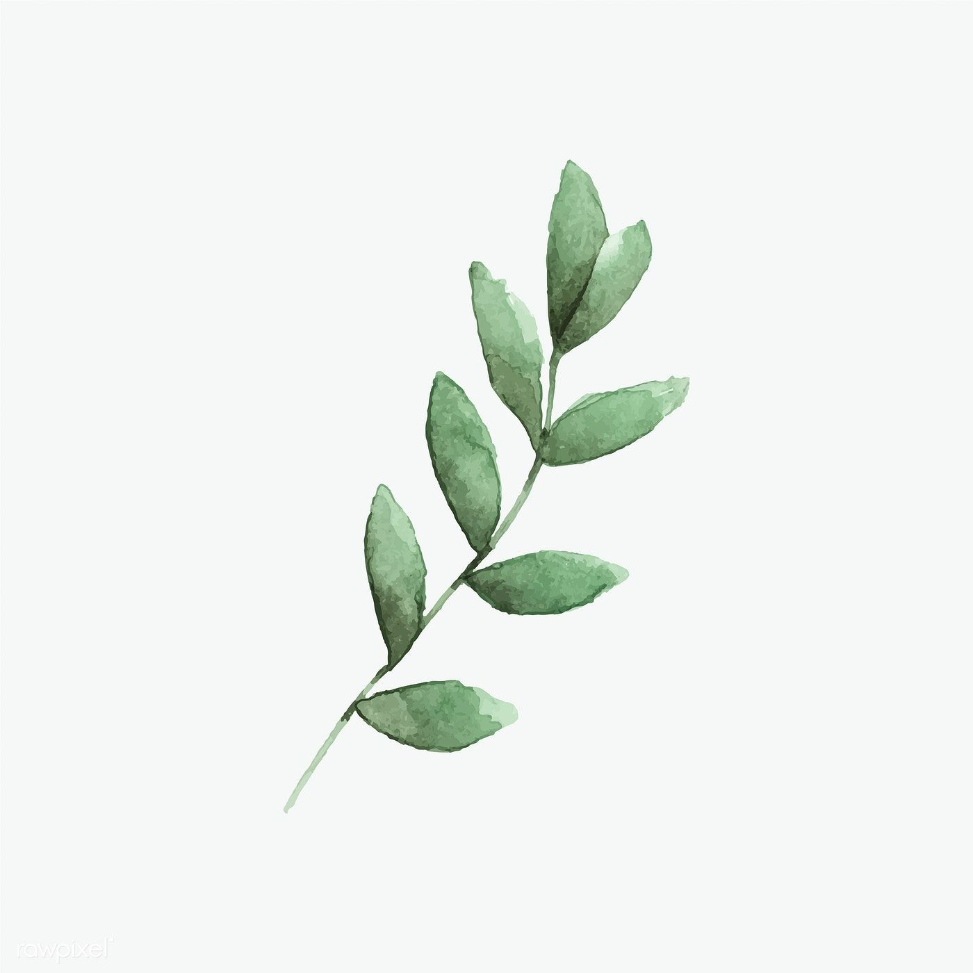Seeded Eucalyptus Branch Painted In Watercolor Vector Free Image