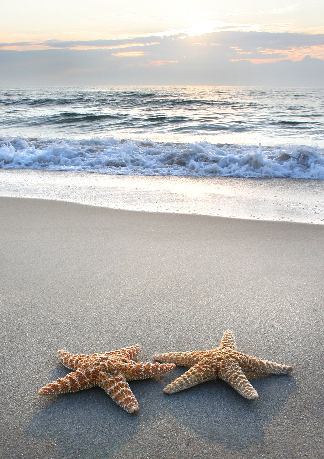 ~Starfish~ Every life form seems to reach out to its own ...
