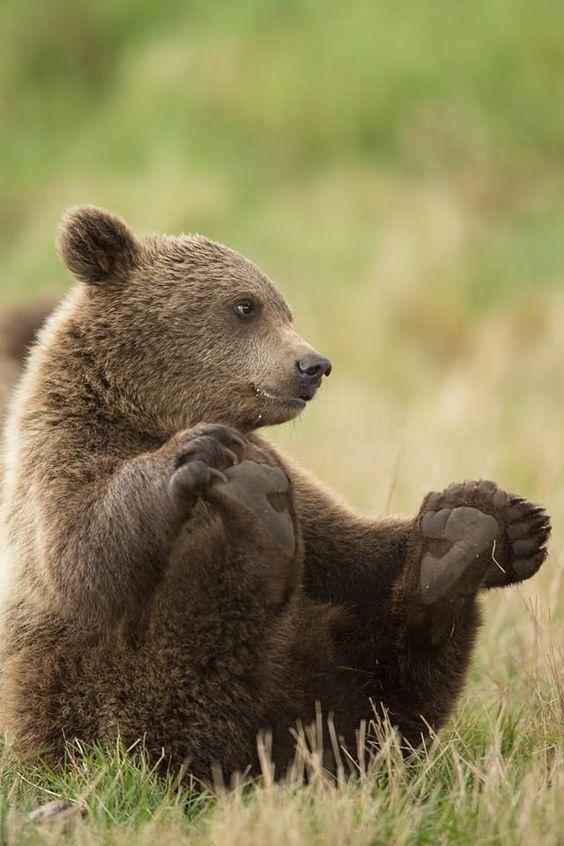 фото медвежат в хорошем качестве когда