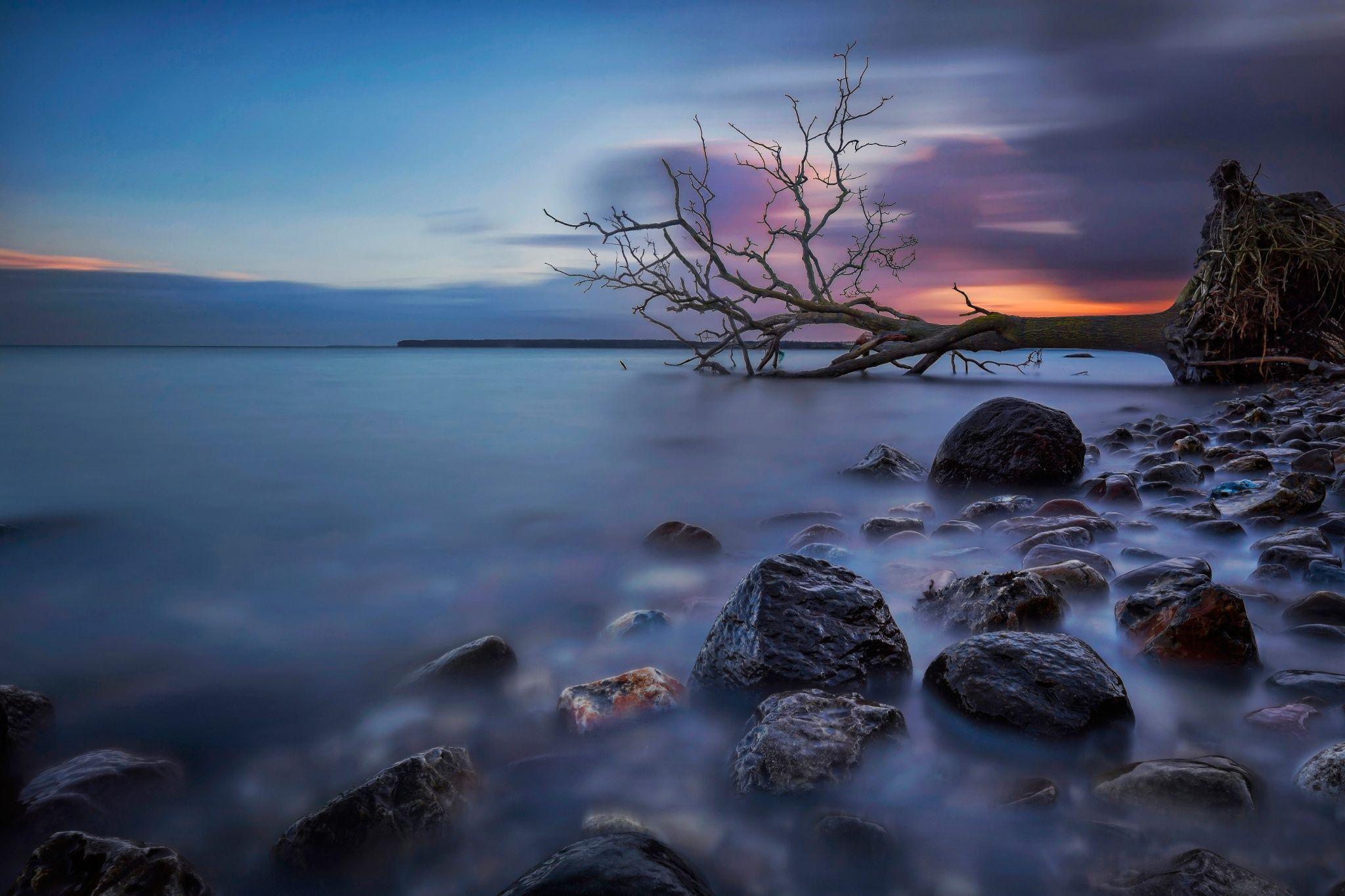 Фотография The Fallen Tree V автор Martin Worsøe Jensen на 500px
