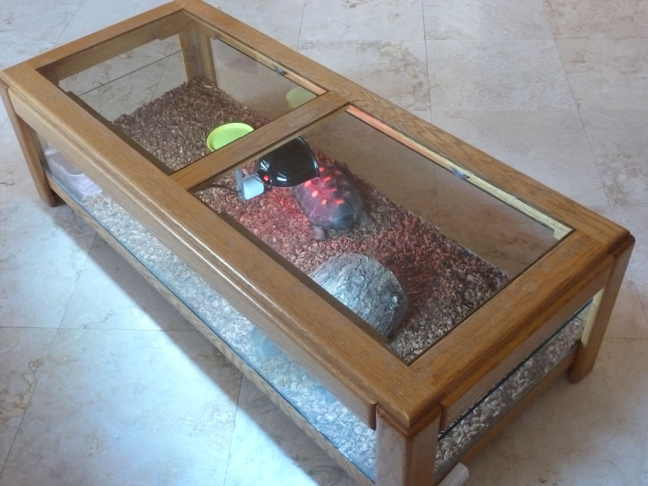 Tortoise coffee table terrarium animal projects for Coffee table enclosure