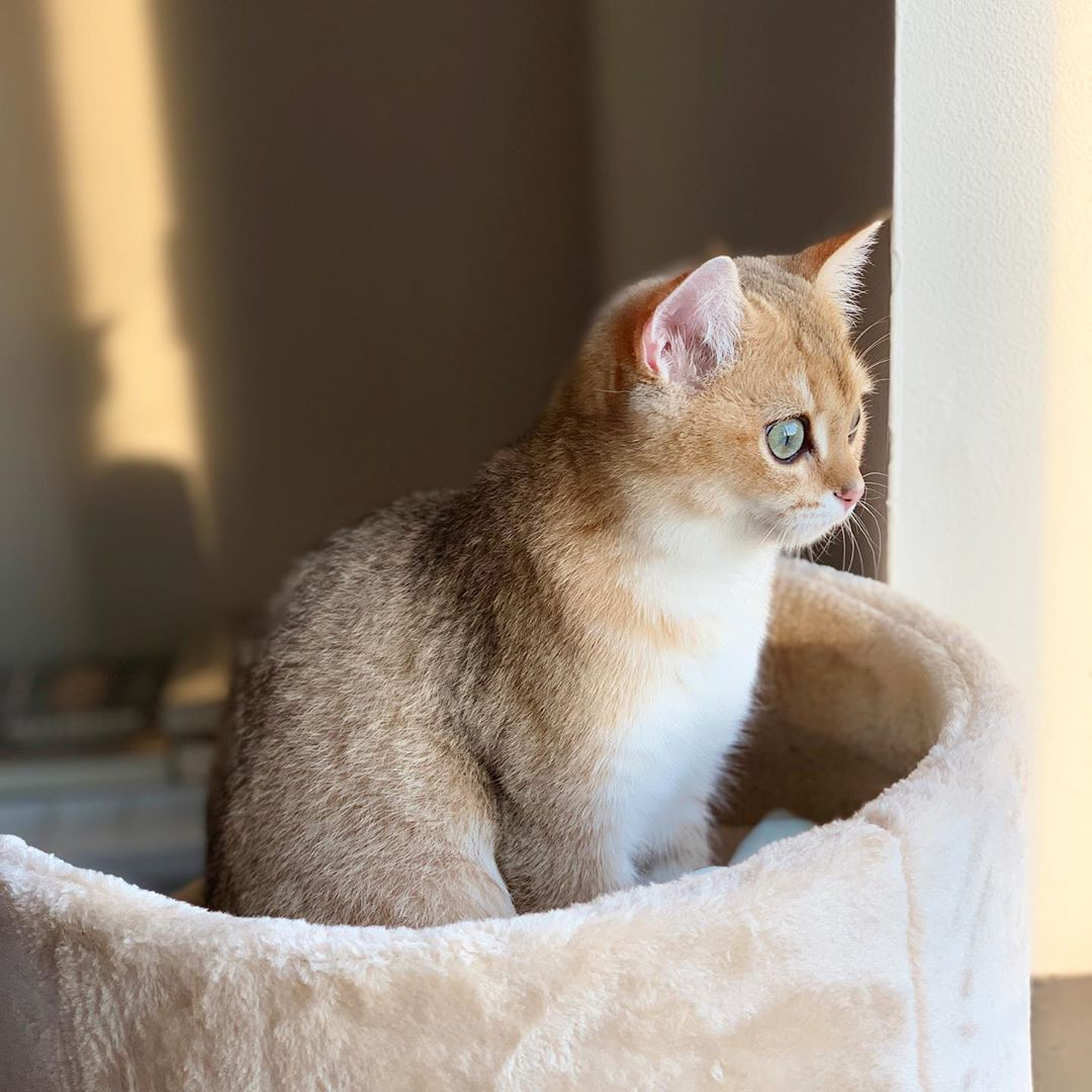 Cute Cats Cute Cats And Kittens Cute Cats Breeds Cute Cat Videos Cute Cats With Big Eyes Fluffy Cat Cute Cats And Kittens Kittens Cutest Cute Cats