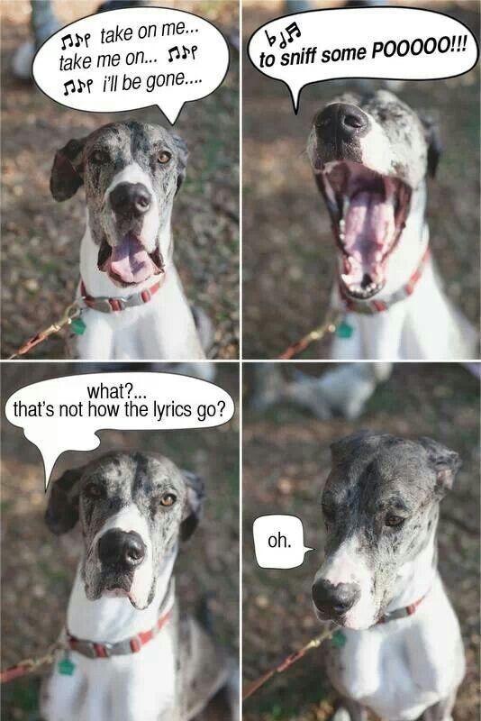 Great Dane Funny Great Dane Funny Dog Memes