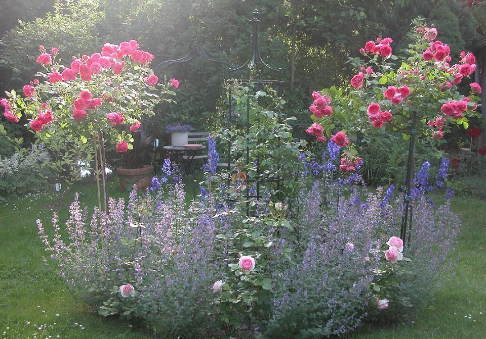 Rosenbeet garten pinterest garten rosenbeet und rosen - Rosenbeet ideen ...