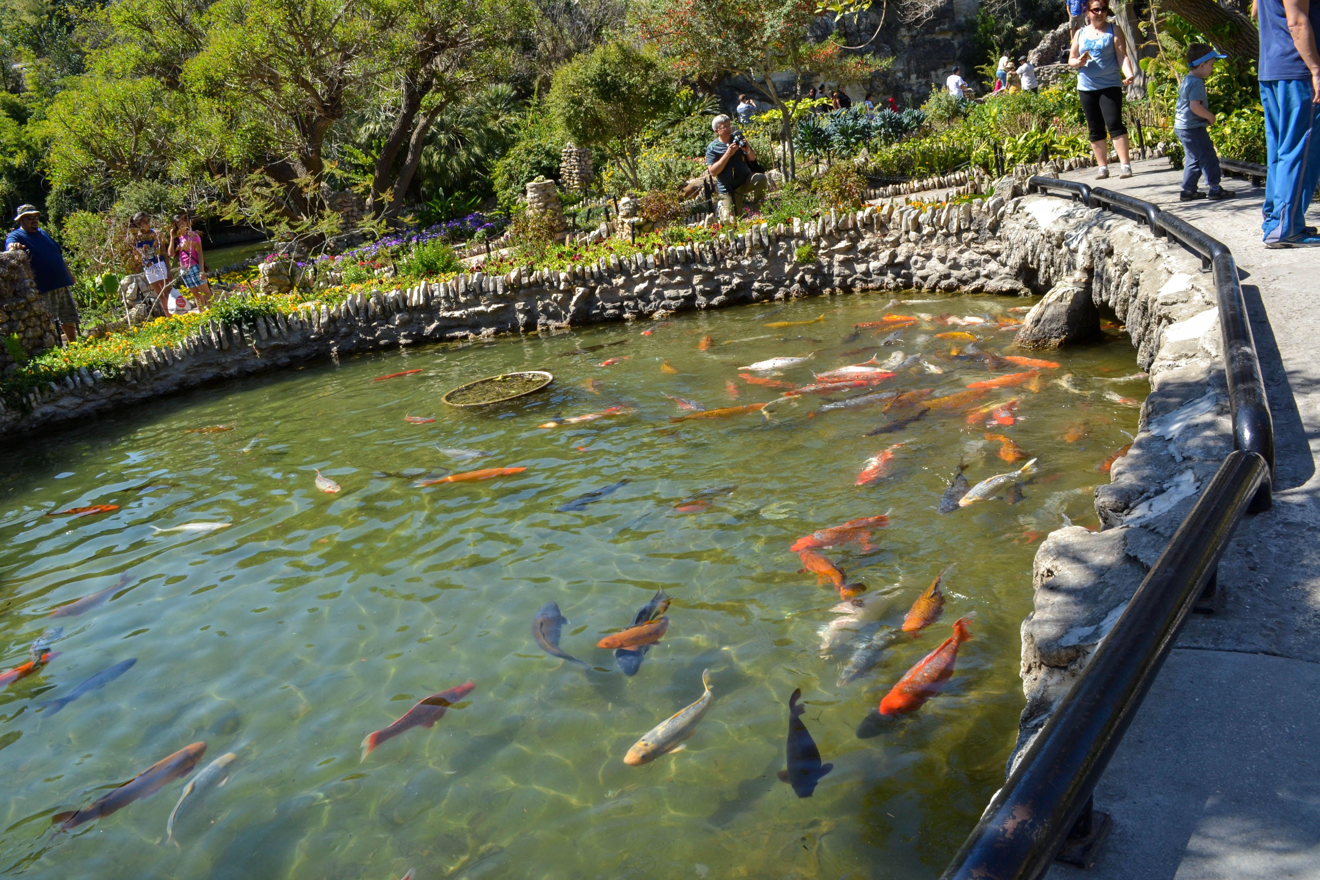 Japanese Tea Garden San Antonio | San Antonio Japanese Tea Garden |  ADRIANu0027S PHOTOGRAPHY