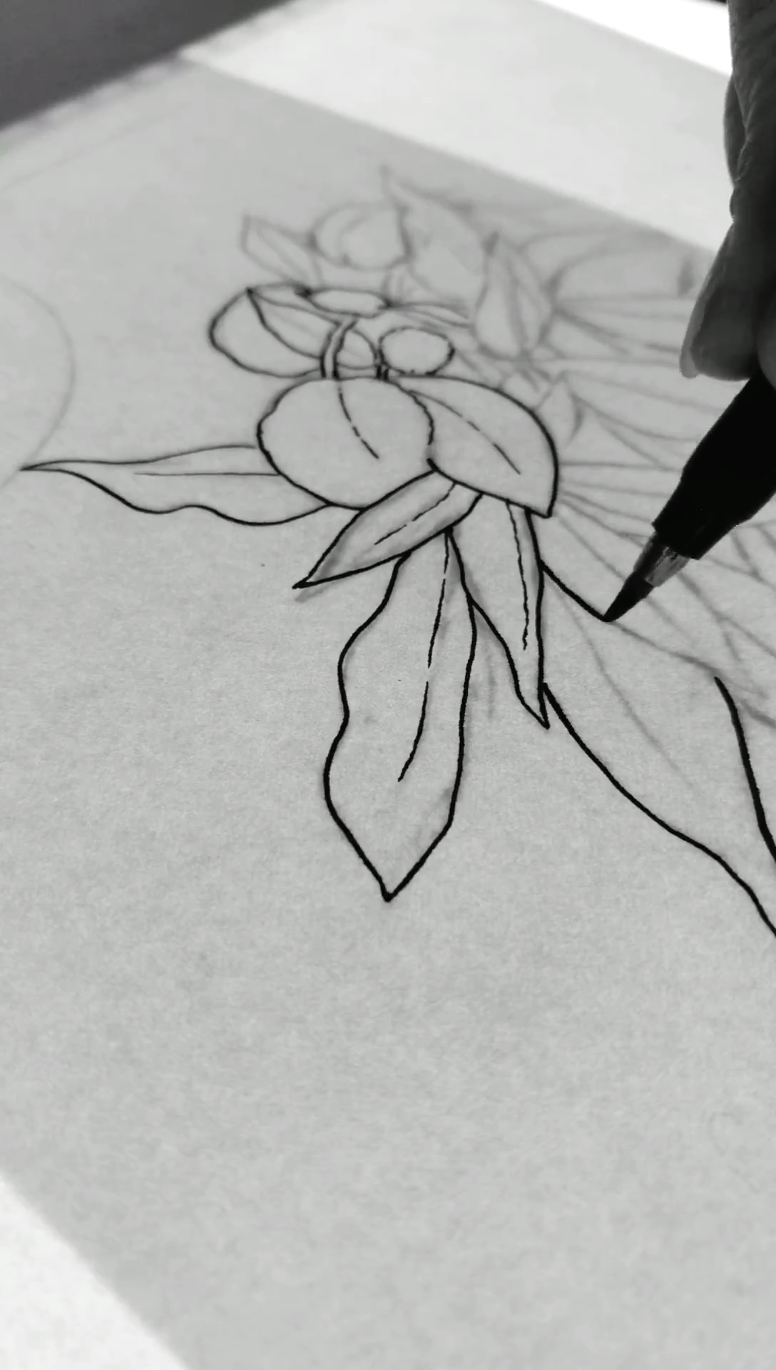 Drawing leaves with a brush pen. Botanical line art process video.